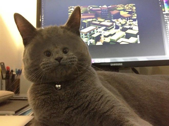 маленькая морда у кота