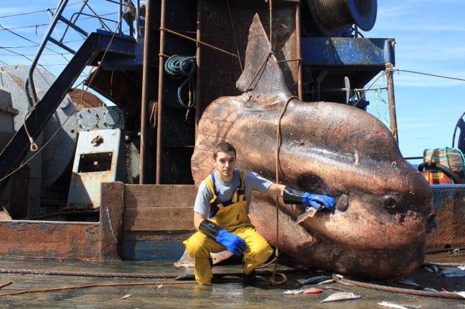 Русский рыбак выкладывает в сеть морских монстров и удивляет пользователей