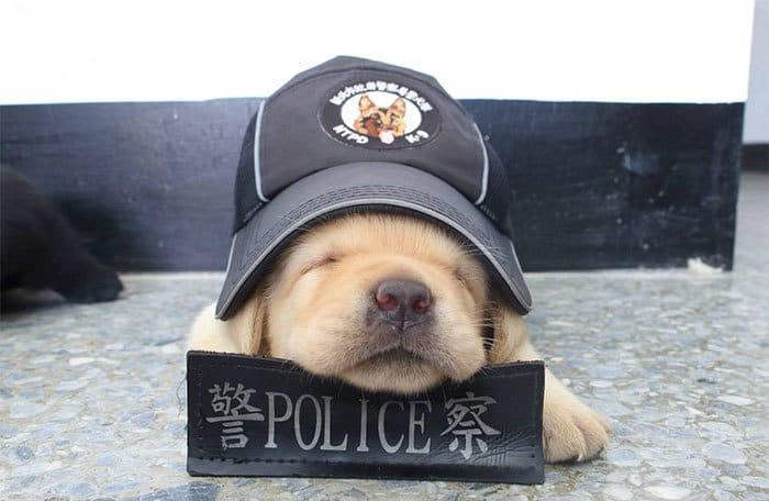 собаки полицейские