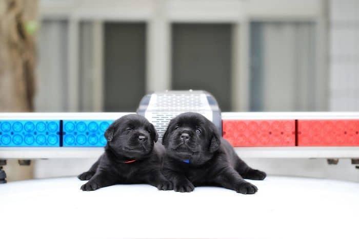 Самые милые полицейские в мире. Теперь мы в полной безопасности!