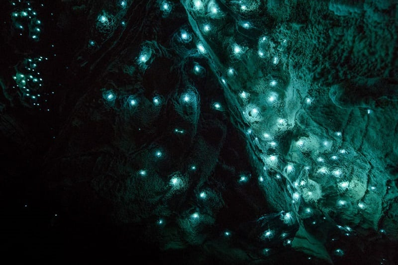 Удивительные пещеры светлячков в районе Вайтомо