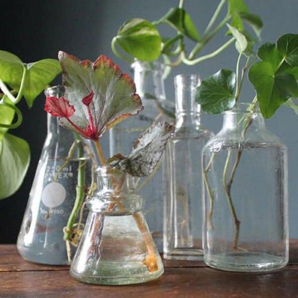 Уникальный рецепт: 1 таблетка для удобрения цветов круглый год