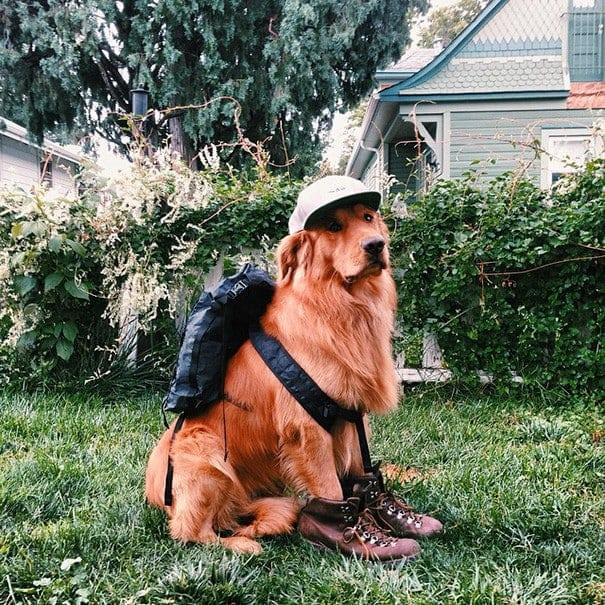 Знакомьтесь это Аспен, собака которая отправилась в кругосветное путешествие