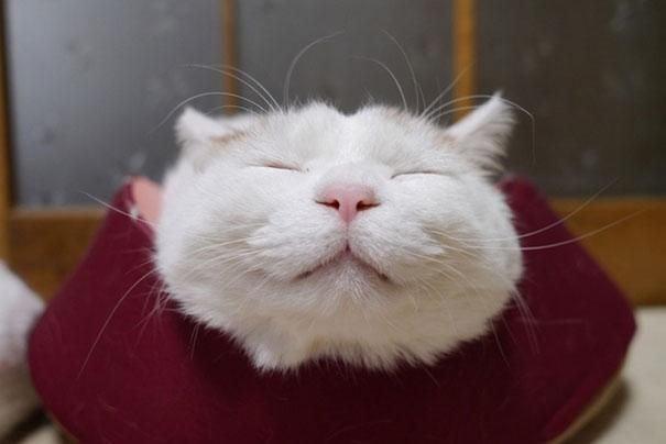 Знакомьтесь, это самый радостный кот в мире