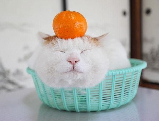 самый довольный кот в мире