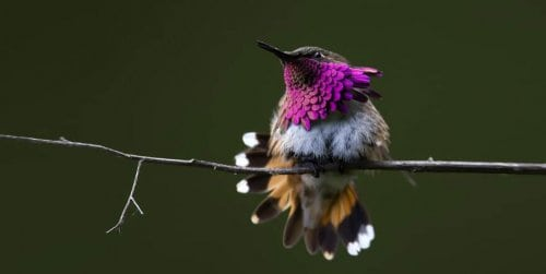 16 видов самых маленьких и красивых птичек на планете колибри