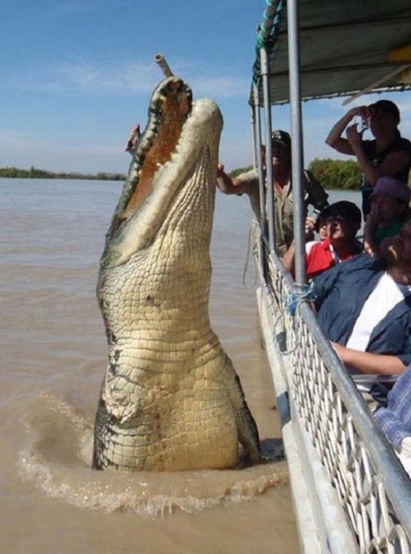20 самых гигантских животных в мире, в реальность которых вы не поверите