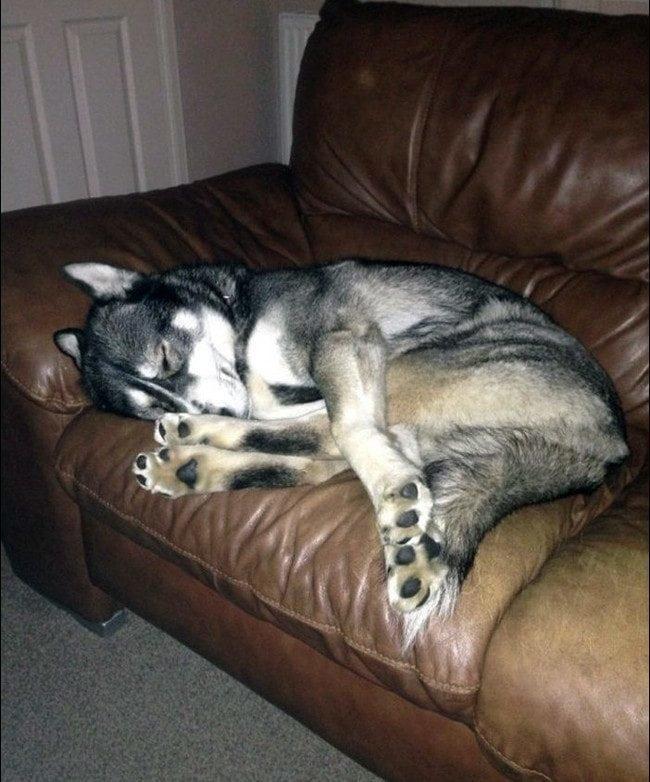 20 спящих собак, которые вызывают бесконечное умиление