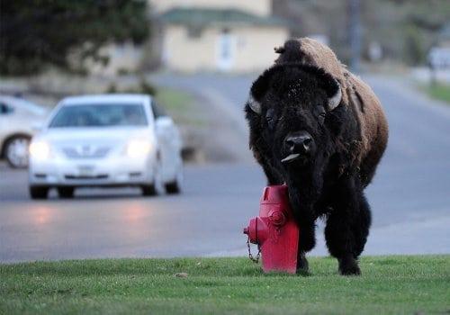 21 потрясающая фотография Йеллоустонского Национального парка