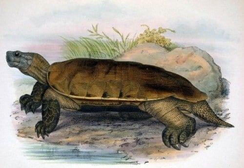 25 видов животных, которых считали вымершими, но они возродились