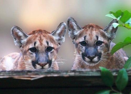 25 редких видов животных