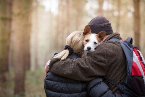 30 лучших работ с ежегодного конкурса фотографий собак
