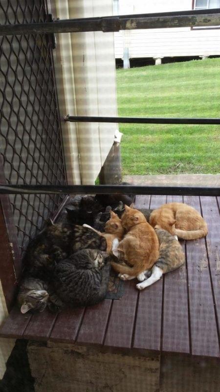 30 людей, которые до этого дня считали, что у них нет кота