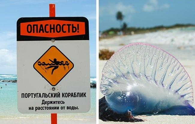 Чего стоит опасаться на отдыхе в экзотических странах?