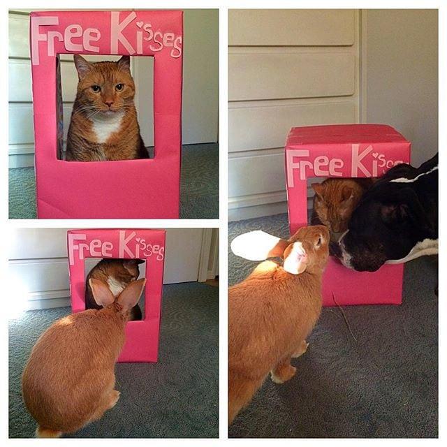 Друзья навсегда: Самая удивительная дружба кота и кролика