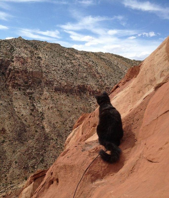 Эта кошка путешествует вместе с хозяином и покоряет горные вершины