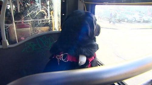 Этот пес каждый день садится на автобус и едет в свой любимый парк
