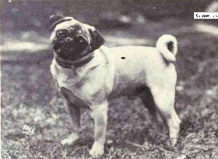 Эволюция собак за последнее столетие. Посмотрите как они изменились!