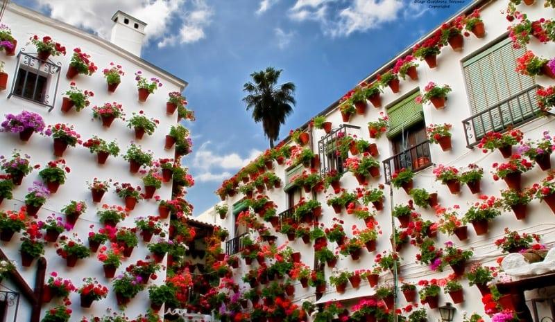 Ежегодный конкурс цветов в Испании. Прекрасное зрелище!