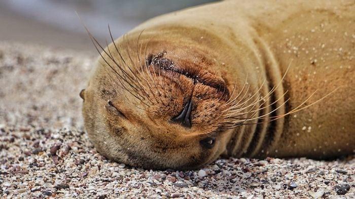 Фотографии милых морских львов с Галапагосских островов