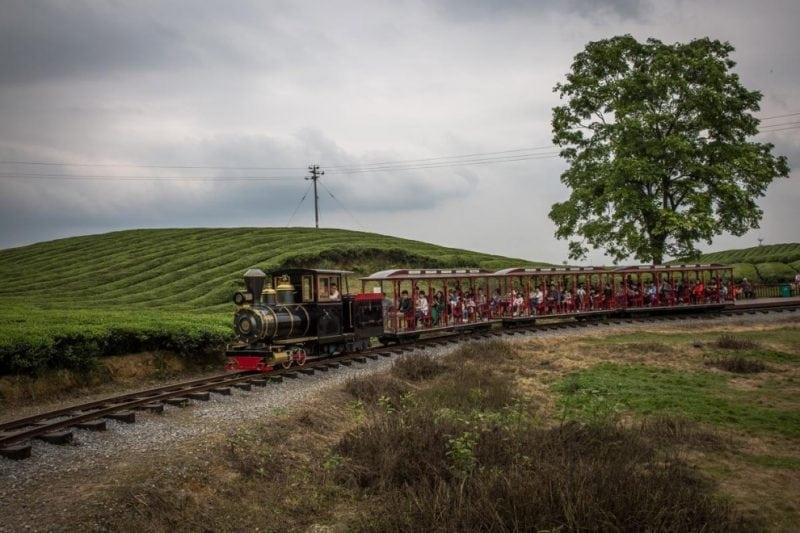 Фоторепортаж с чайных плантаций в Китае: тяжелый труд и потрясающие пейзажи