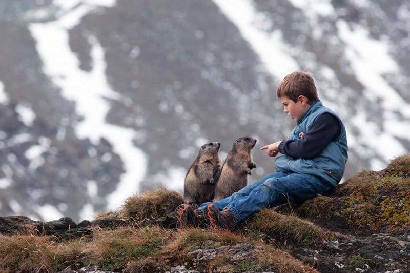 История необычной дружбы австрийского мальчика с альпийскими сурками