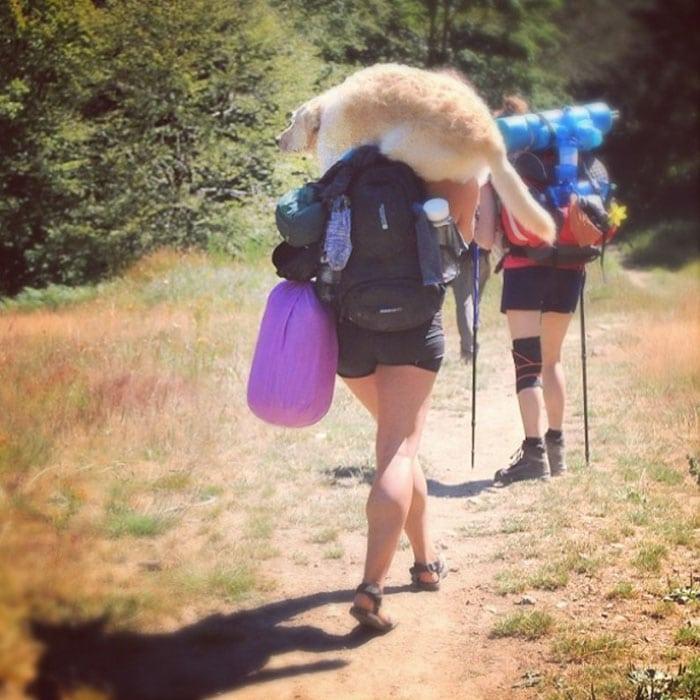 Из мини-фургона она сделала настоящий дом для путешествий и отправилась в кругосветку со своей собакой