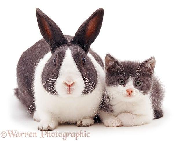 Как две капли воды: разные животные, которые очень похожи