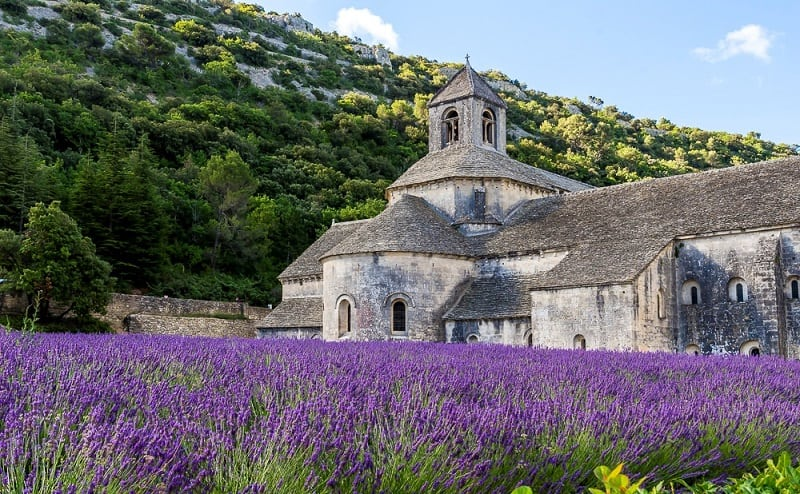 Лаванда – душа Прованса: прекрасные пейзажи