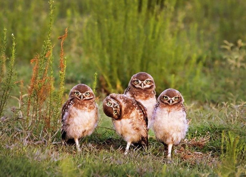 Международный конкурс на самое забавное фото животных: 17 лучших работ