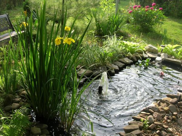 Мужчина сделал в своем дворе волшебный сад цветов. Просто чудо ландшафтного дизайна!