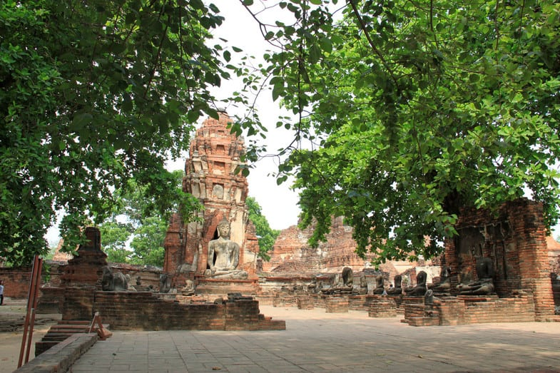 Необычное дерево в Таиланде с головой Будды