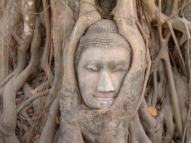 дерево в Таиланде с Буддой