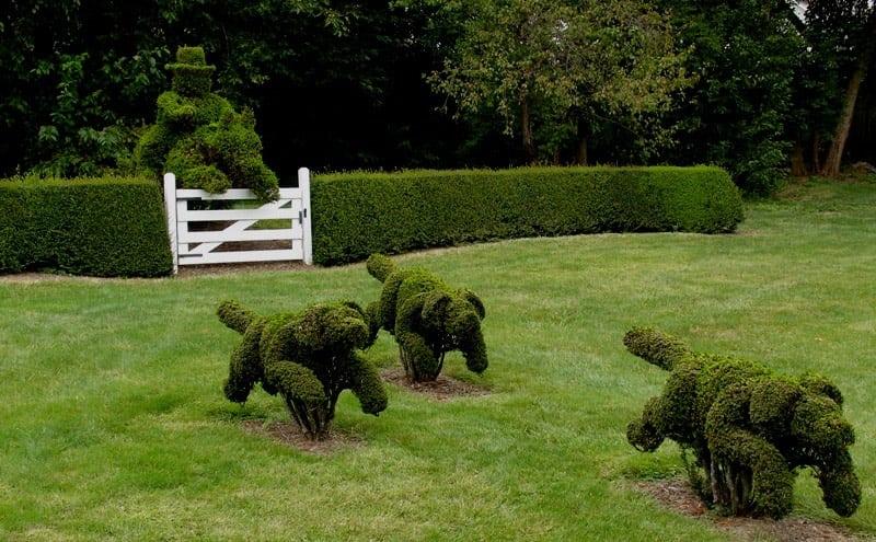 Необычные декорации из кустов - топиари