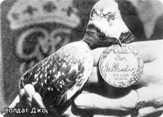 Крылатые герои времен Первой и Второй Мировых воин - голуби и голубки