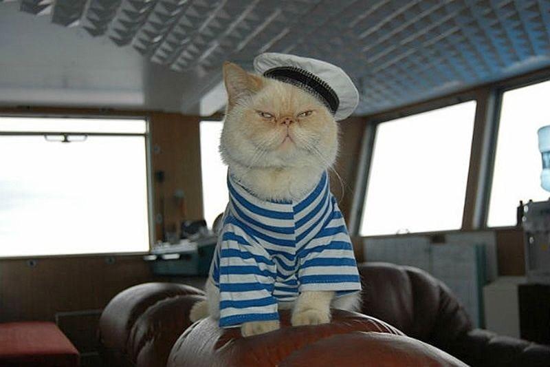 """Старший помощник капитана кот """"Матрос"""". Вот его рабочий день ..."""
