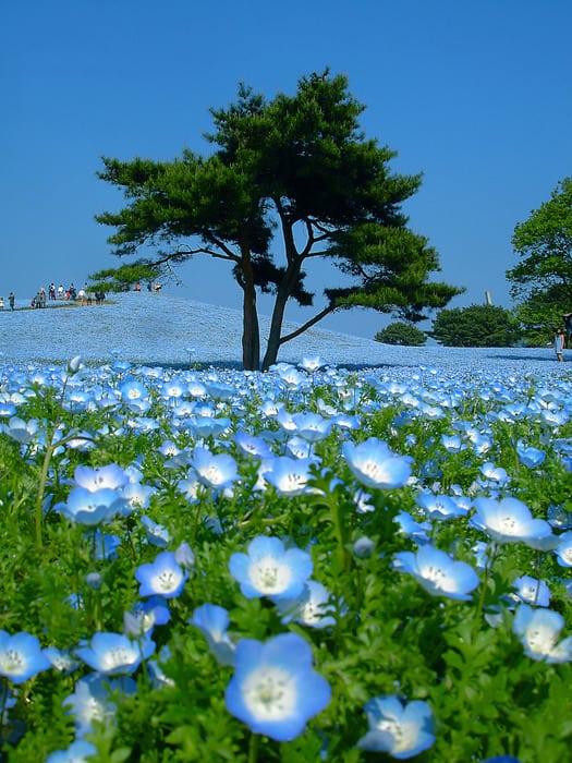 Парк Хитачи в Японии каждый сезон меняет краски