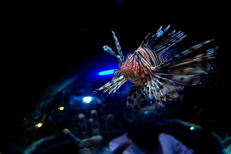 Самый огромный в мире аквариум в Дубае