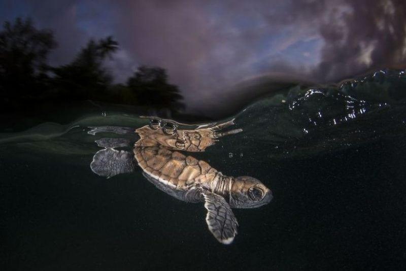 ТОП 10 снимков победителей с конкурса National Geographic в рамках фотографии дикой природы