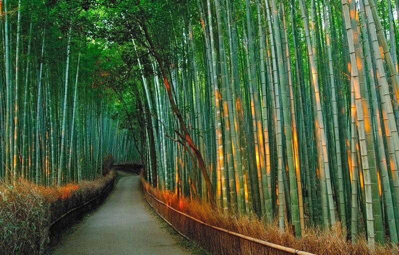 Удивительная достопримечательность в Японии: Бамбуковая роща Сагано