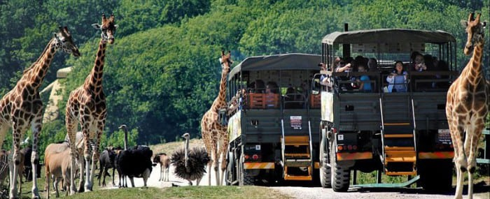 Уникальный сафари-парк: Коттедж посреди парка с дикими животными