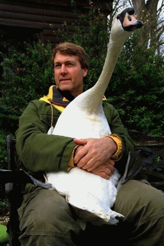 Журналист спас лебедя, а тот отблагодарил его в ответ...Самая удивительная история!