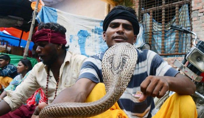 Змеиный фестиваль Nag Panchami в Индии - необыкновенное зрелище!