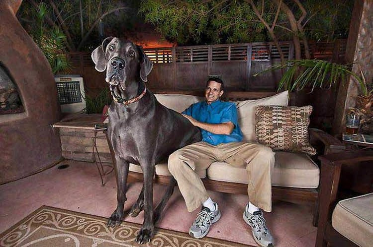 10 самых крупных собак в мире: фотоподборка