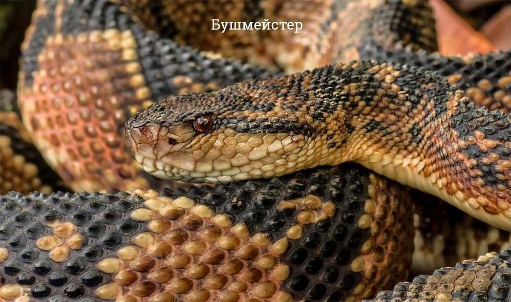 Самые большие змеи в мире – Топ-10 (фото)
