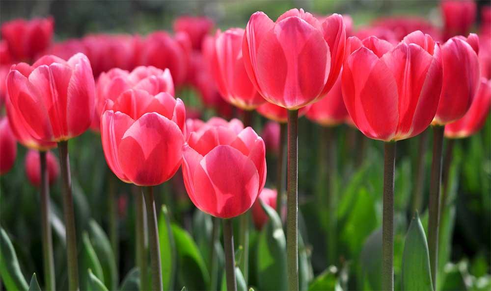 Самые присамые красивые цветы в мире (10 фото)