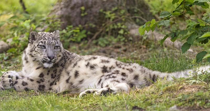 Самые красивые и редкие животные в мире, какие они